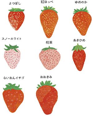 九州じゃらん 1月号いちごのイラスト 公式 イラストレーター アライヨウコ Webサイト